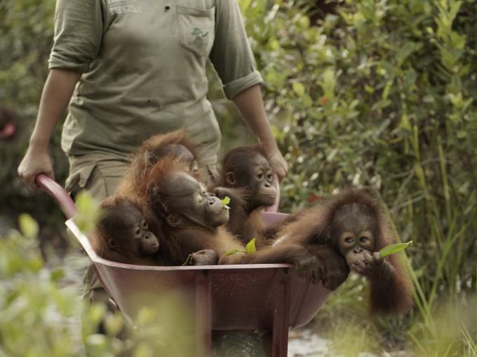 Orangutan Jungle School