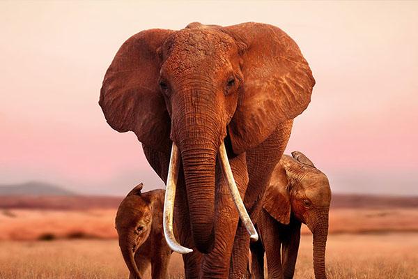 elephantqueen_0HERO