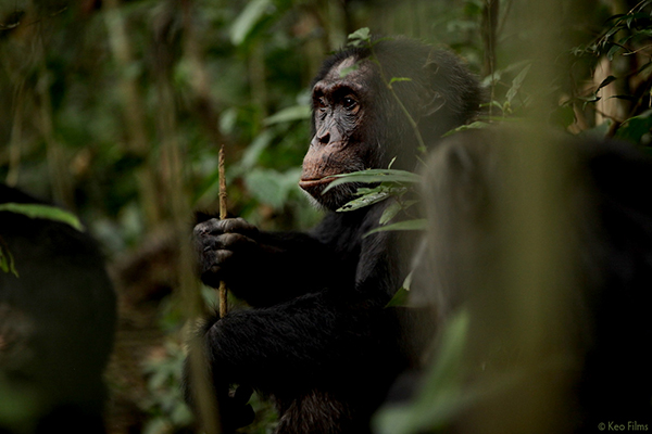 Rise Of The Warrior Apes-promo-still-2