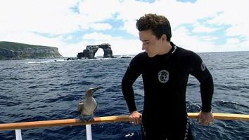 The Third Dive Rob Stewart