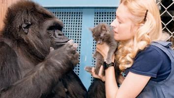 Koko the Gorilla Who Talks