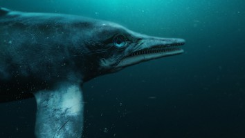 Attenborough and The Sea Dragon