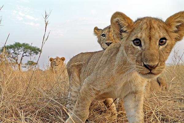 Serengeti: Episode 1
