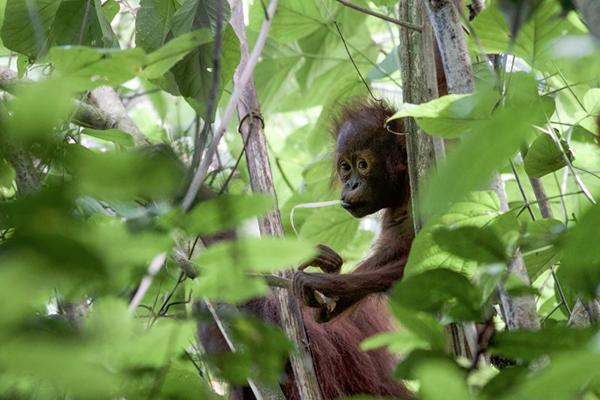 TMFS_Borneo_graded_02-943x531