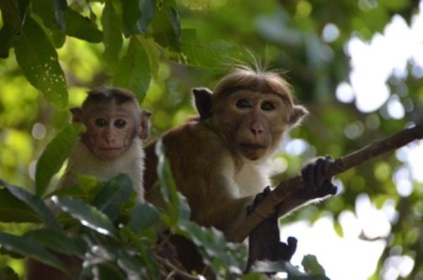A Life Among Monkeys-2