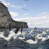 BBC2, Maramedia prep Ewan McGregor-narrated Shetland Islands wildlife doc