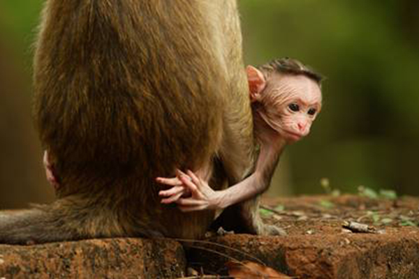 ANIMAL BABIES FIRST YEAR ON EARTH