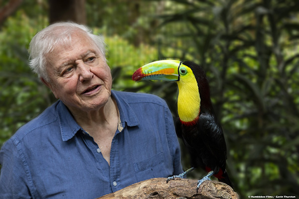 Netflix, BBC team up with David Attenborough on 'Life In Colour'