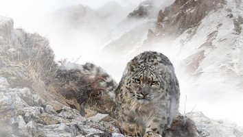 Wild Treasures of China