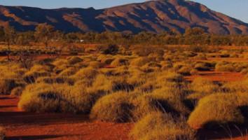 Freebird all3media outback