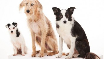 Dog Tales low res image