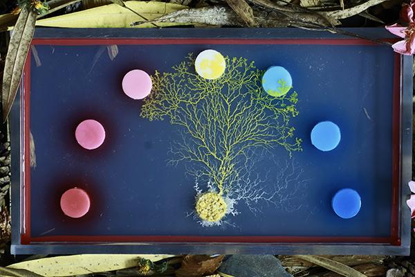 6_Blob_Nutrition Experiment_ Hauteville Productions