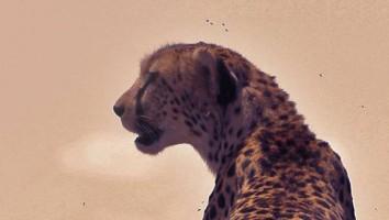 Cheetah_3840x2160 (1) (2)