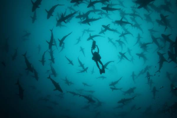 arte_private life of sharks