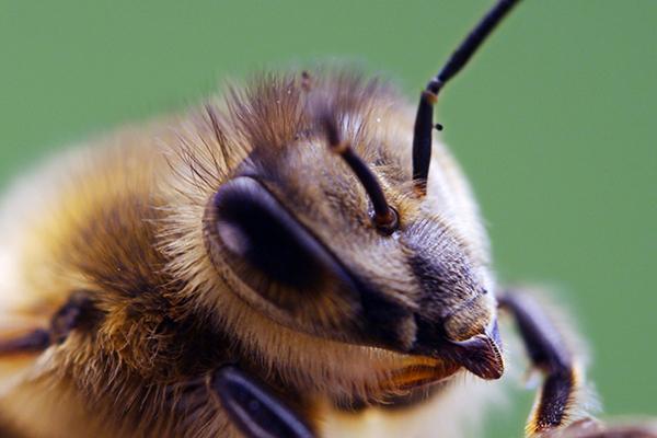 bees-diary-01