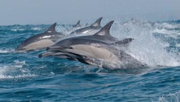 Oceans Greatest Feast